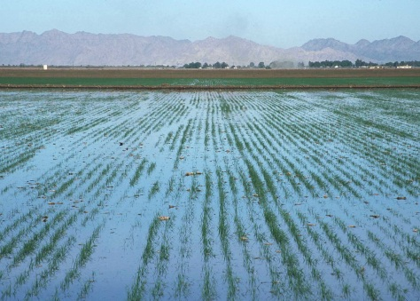 All Rights: Flood Irrigation